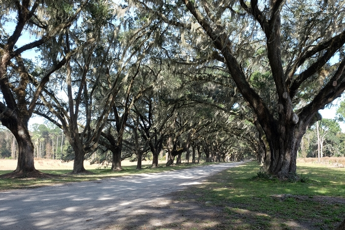 Wormsloe Historic Site: Savannah/Coastal Georgia Trip