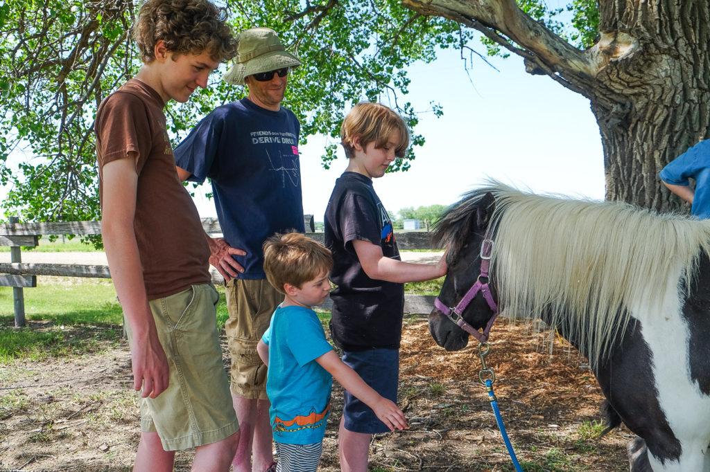 petting a miniature horse