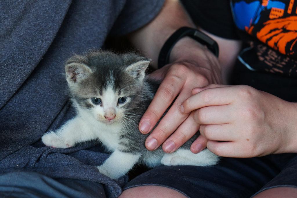 petting a gray kitten