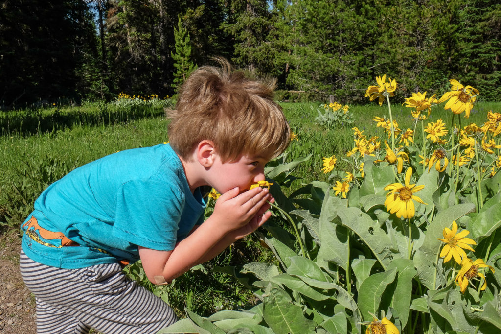 sniffing flowers on the Lakeshore Trail, Grand Teton