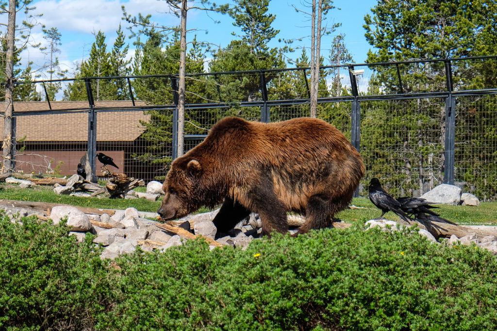 Yellowstone Grizzly RV Park and West Yellowstone, MT: Campground Review and MORE!